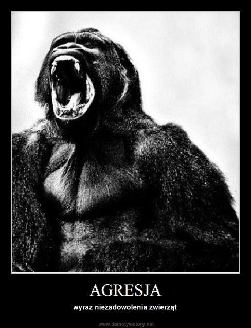 AGRESJA - wyraz niezadowolenia zwierząt