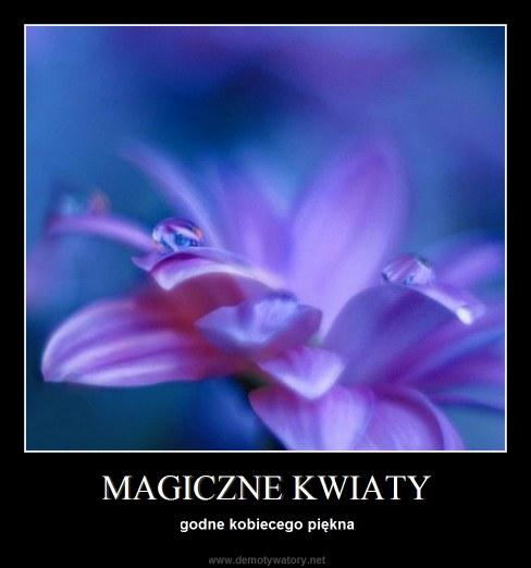 MAGICZNE KWIATY - godne kobiecego piękna