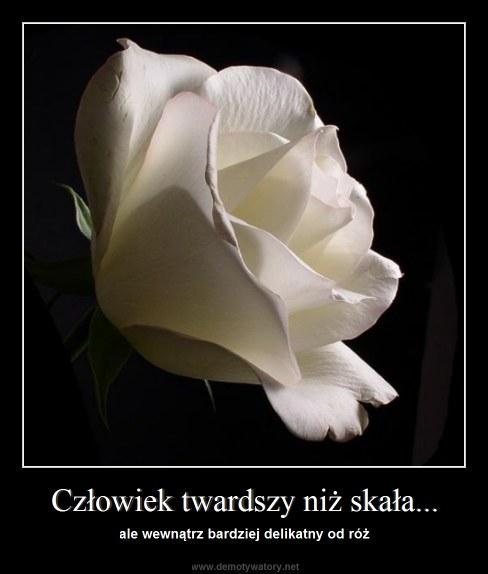 Człowiek twardszy niż skała... - ale wewnątrz bardziej delikatny od róż