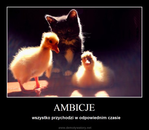 AMBICJE - wszystko przychodzi w odpowiednim czasie
