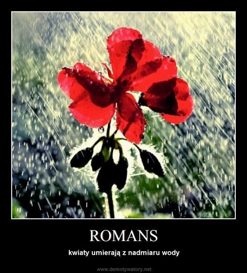 ROMANS - kwiaty umierają z nadmiaru wody