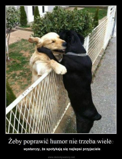 Żeby poprawić humor nie trzeba wiele - wystarczy, że spotykają się najlepsi przyjaciele