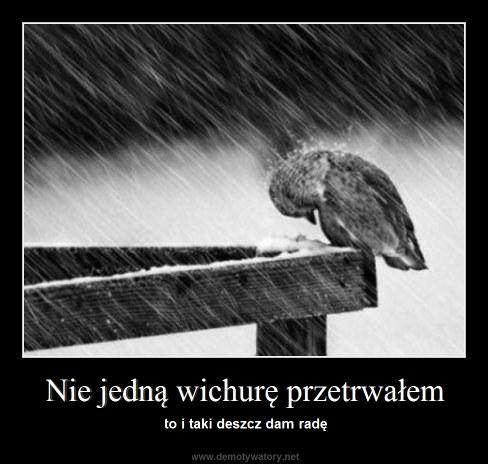 Nie jedną wichurę przetrwałem - to i taki deszcz dam radę