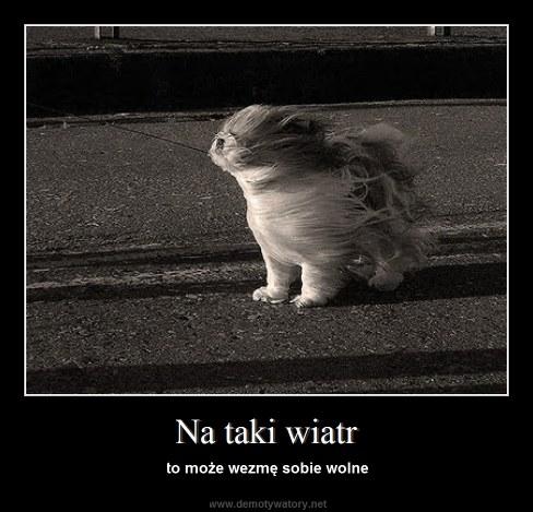 Na taki wiatr - to może wezmę sobie wolne